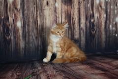 Котенок норвежской лесной кошкиTuta Furry-Neko 24