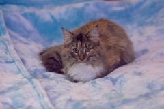 Ursula Furry-Neko